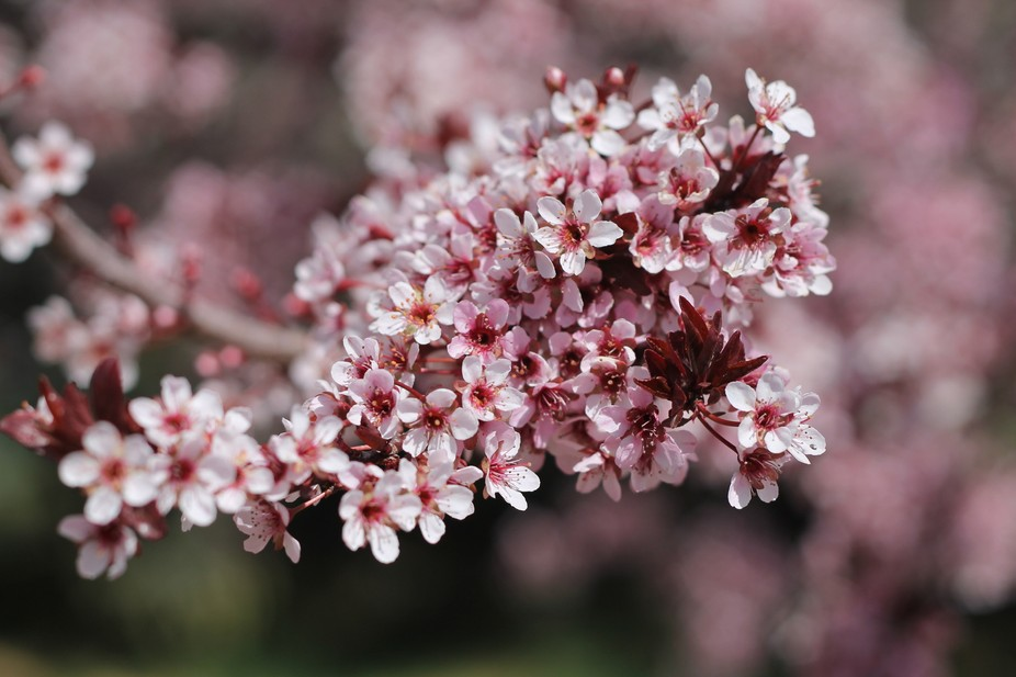 upclose on a flowering tree