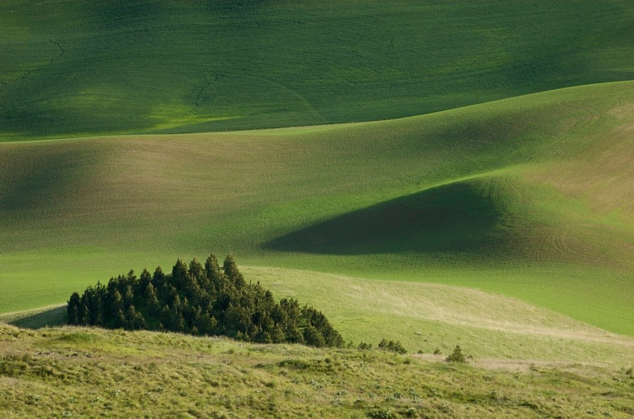 Springtime in the Palouse country of Eastern Washington vibrates in a cacophony of green hues and...