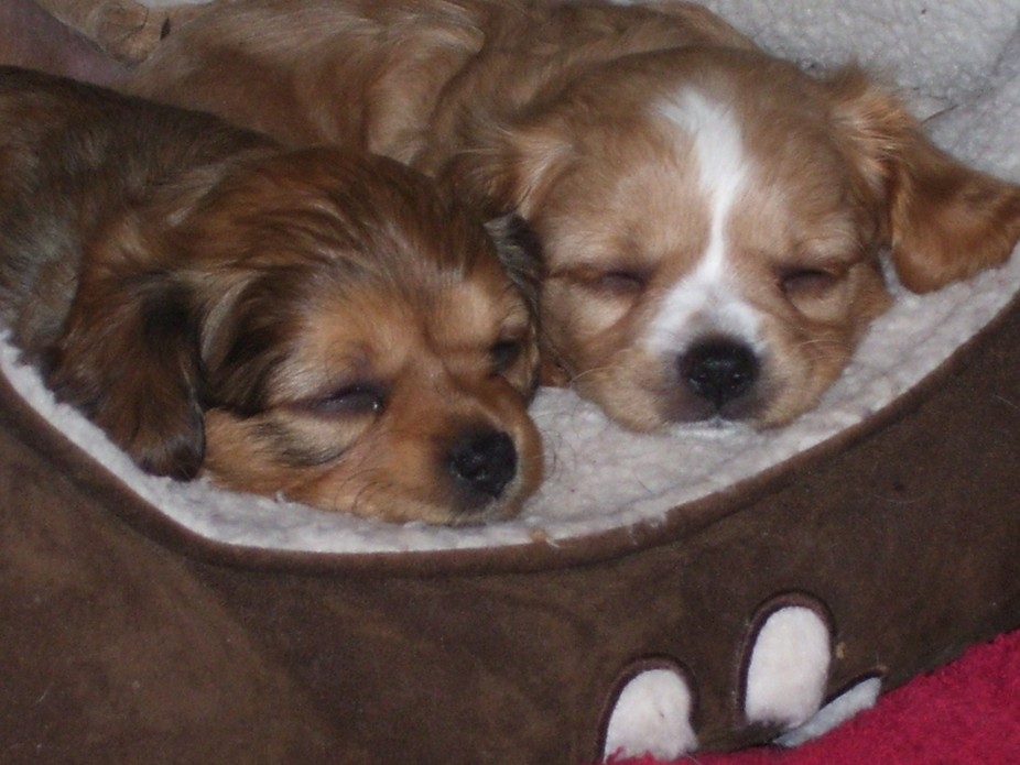2 of our puppies