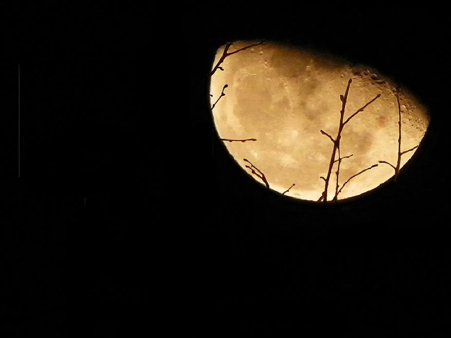 Moon rise in Monterey Ap 12 (?)2012