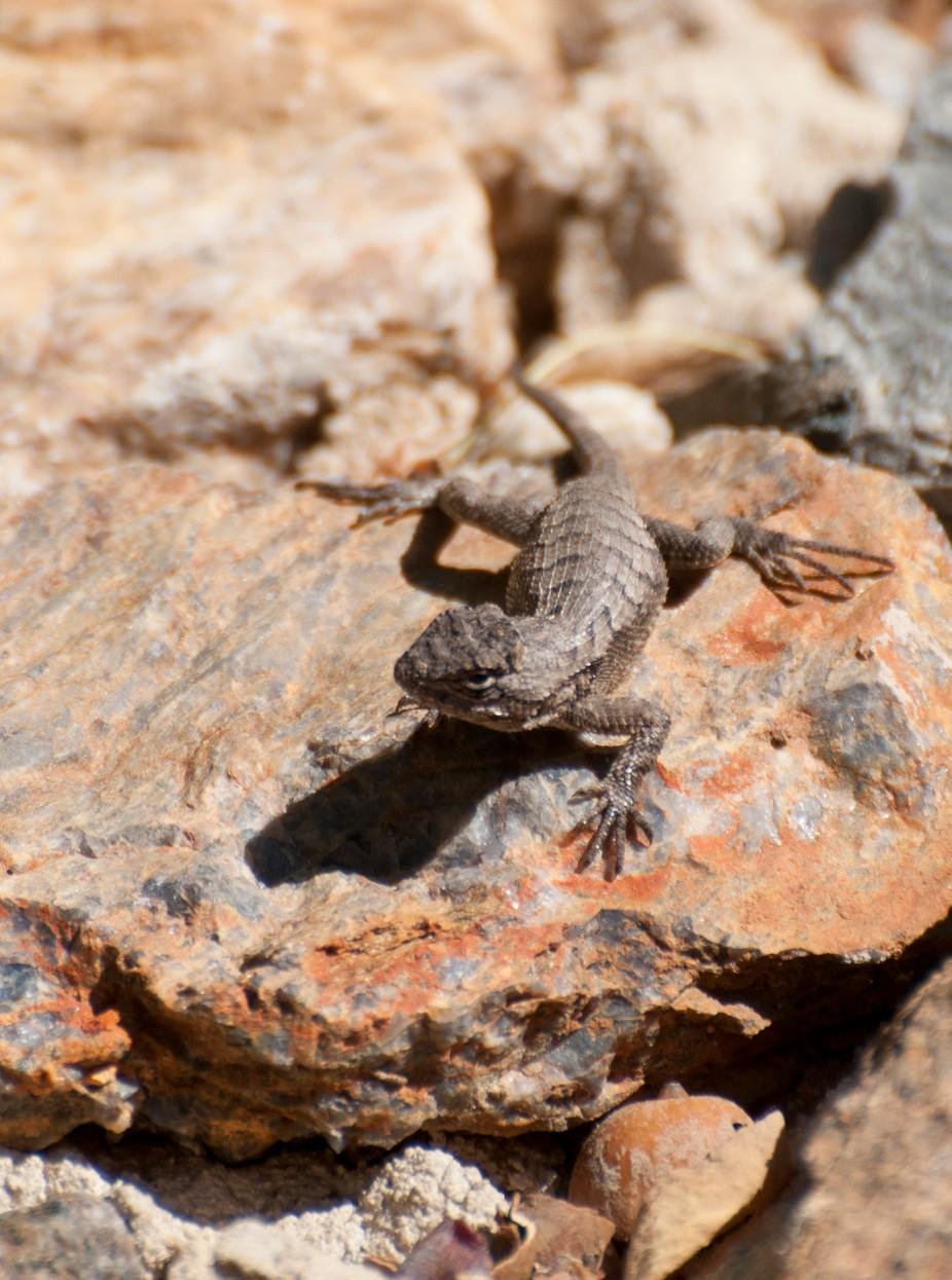lizard4_8_0364