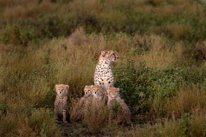 Mom can we go by calvinheinly - Explore Africa Photo Contest