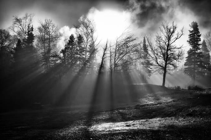 Sun Through Trees B&W by melissa3339 - Dark Forest Photo Contest