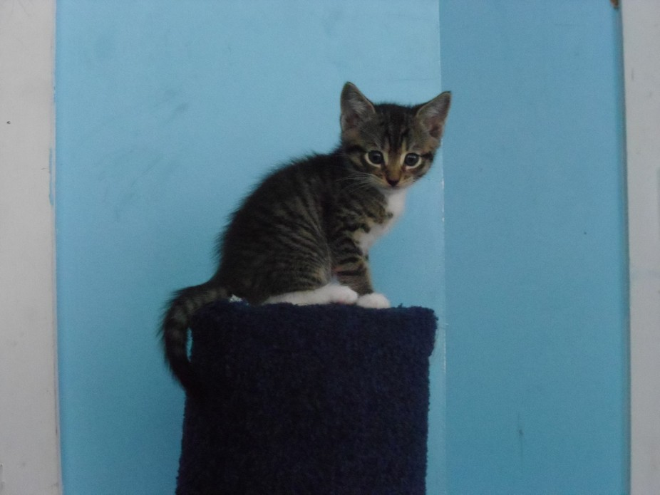 Having got caught by the kitten of me taking pictures of him and his siblings, the kitten decides...