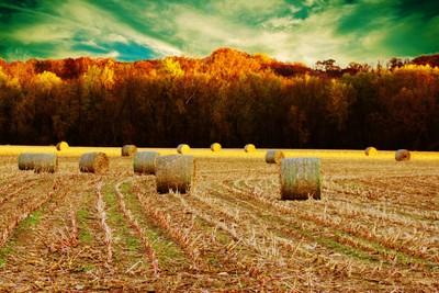 Bales of Autumn