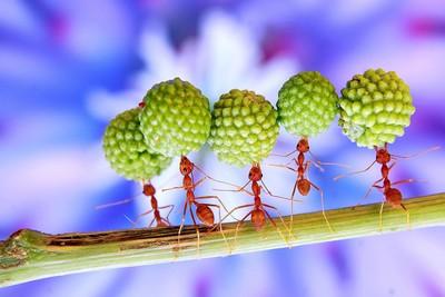 5 SUPER ANTS
