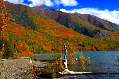 Fall...Alaska Style