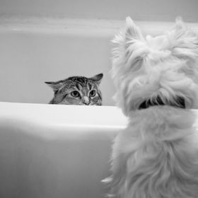 Bella (cat) and Sir Hobo Jack (dog) having a standoff in the bathtub.