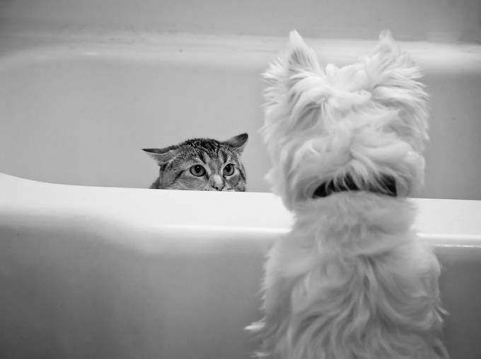 Bathtub Standoff. by Maddhatter - Only Pets Photo Contest