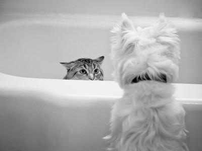 Bathtub Standoff.