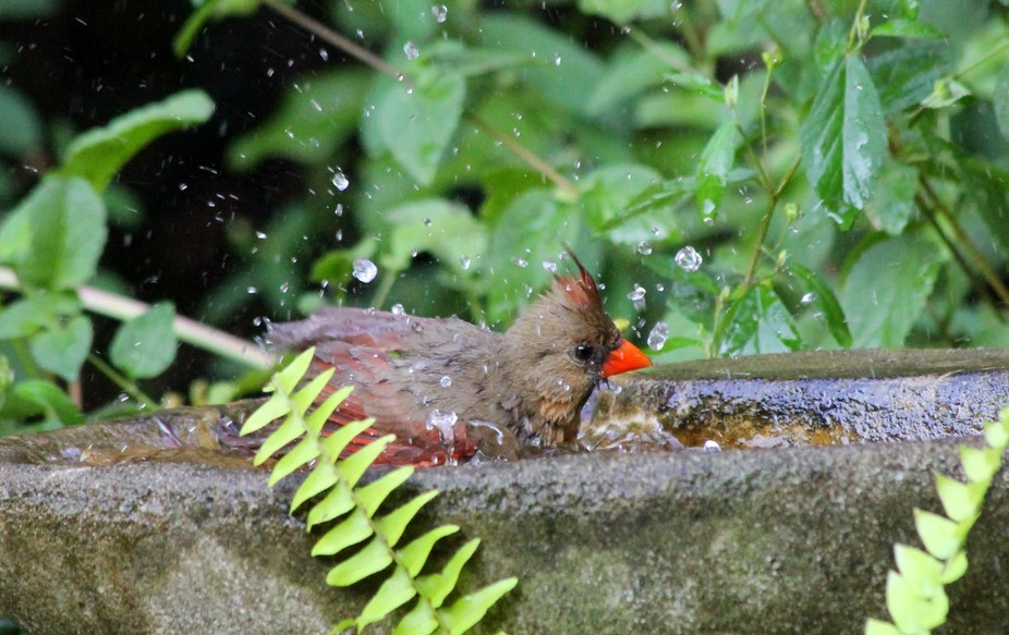 Cooling off! belongs to Cardinals