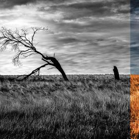 branching out – figuratively and artistically. Back road around Tooborac, Vic, Aus.