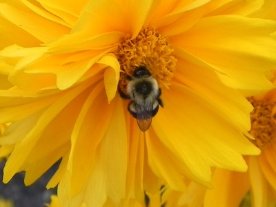 6.6.12 Second Macro Bee!