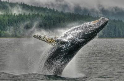 l whale