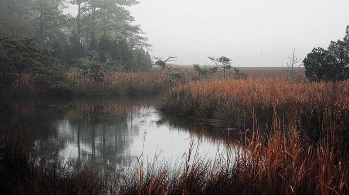 NC wetlands