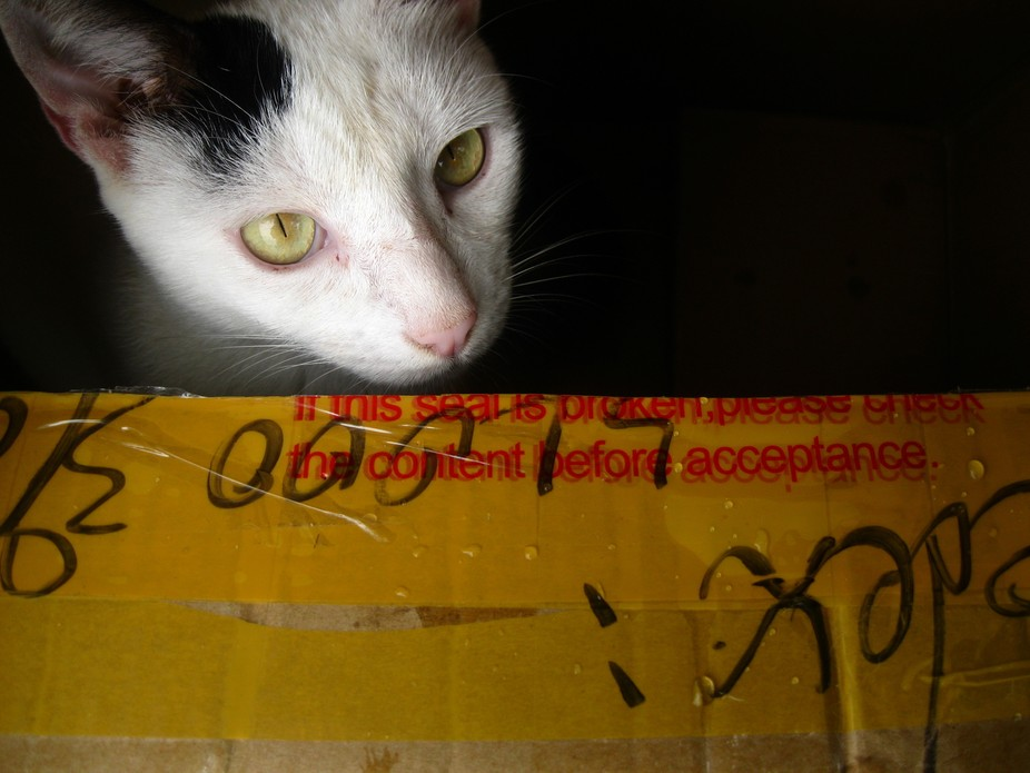 Cuteness in a box