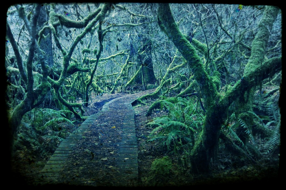 This shot is taken near Greenwater, Washington in a park called Federation Forest in November 200...
