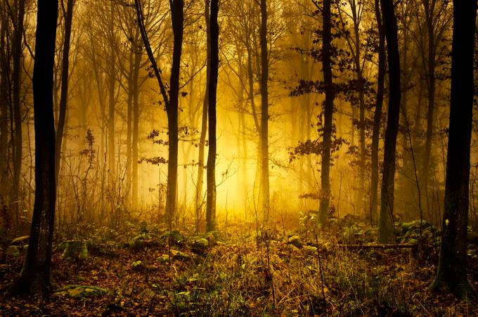 Mystic Forrest by bjornsphoto - Silhouettes Of Trees Photo Contest