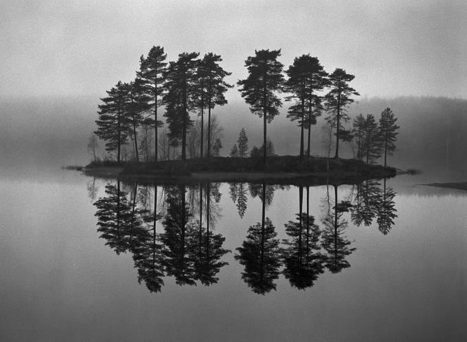 - Ten -  by tom_a_findahl_0381 - Silhouettes Of Trees Photo Contest