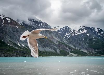 Glacier Bay Fly By