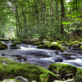 A mountain stream rushing through moss covered rocks.