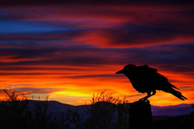 Behind The Lens With chipbhi - photo A crow at Sunset