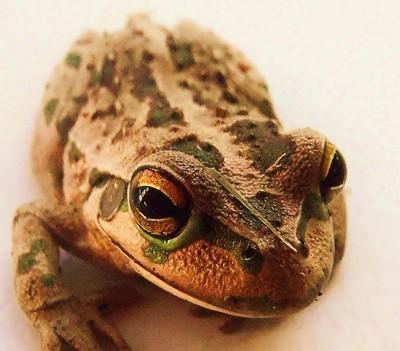 Toad Portrait