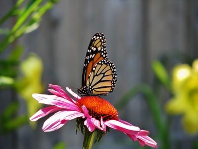 My Garden Beauty