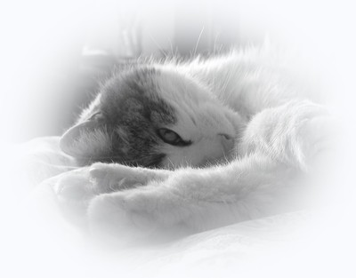 What cats do best ... Sleeping