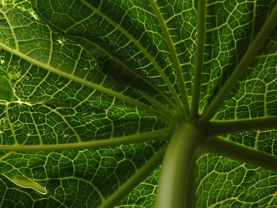 papaya Leaf Art