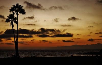 Sun Set with Palm Tree