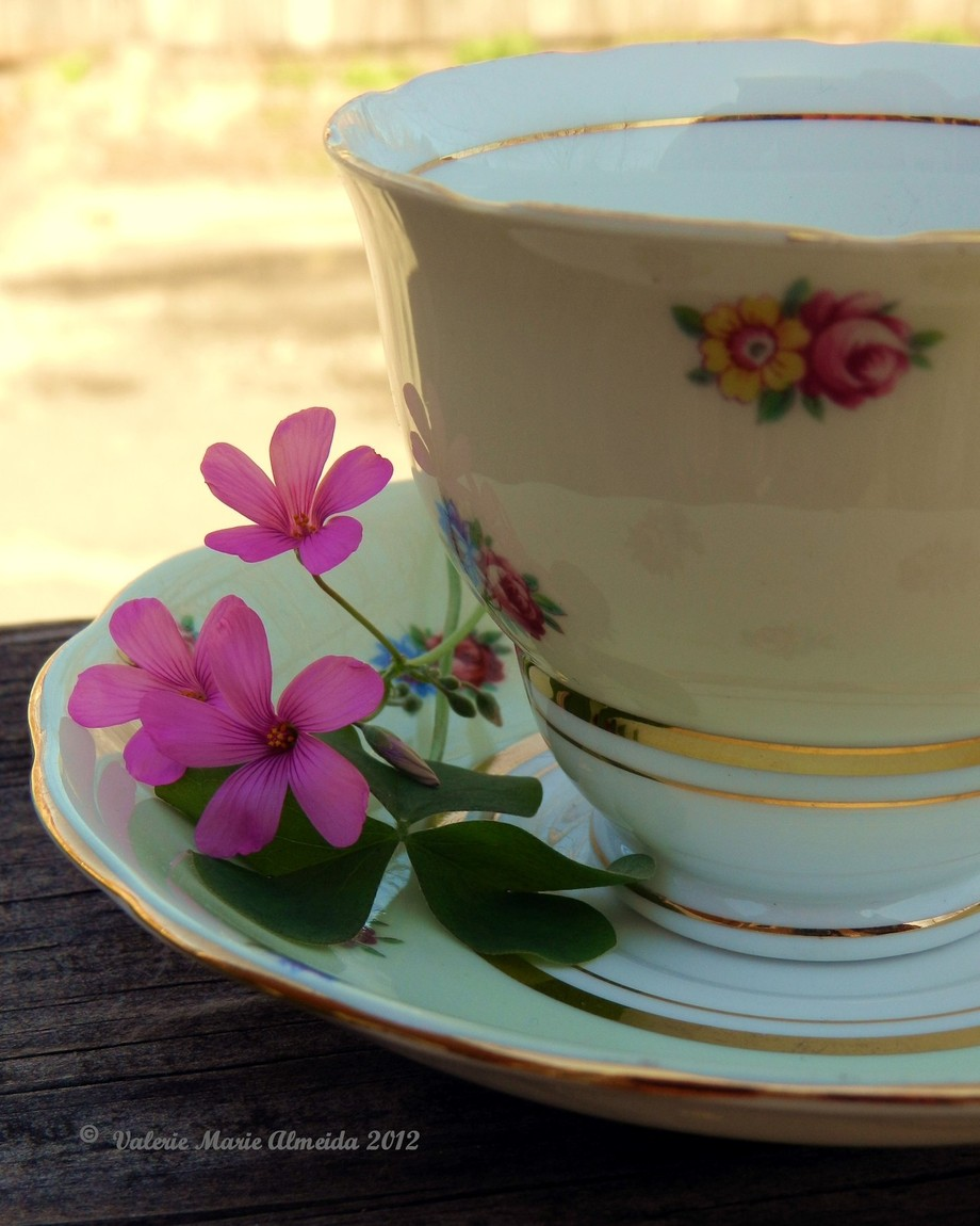 yellow tea cup with pink oxalis flowers