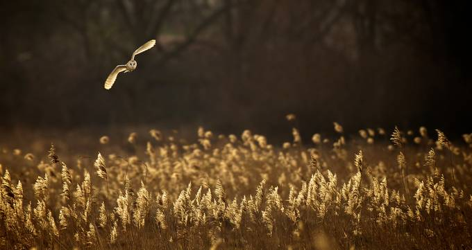 12 Mind-blowing Owls Caught On Camera