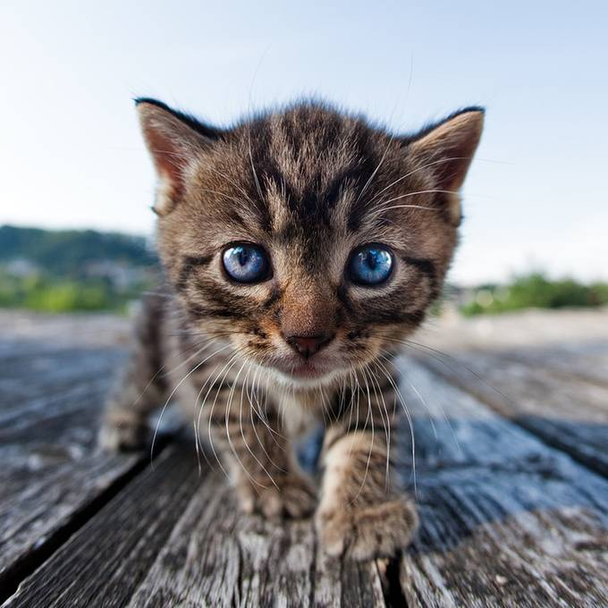 Curiosity by HenrikSpranz - Baby Animals Photo Contest
