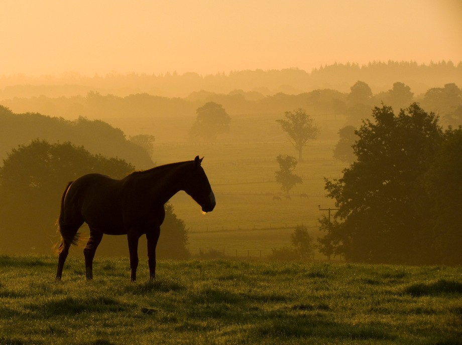 This had been my first attempt at some sunrise photography, but this damn horse kept running in f...