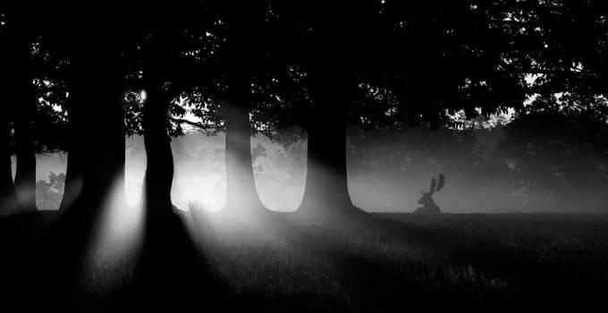 misty buck by bridgephotography - Dark Forest Photo Contest