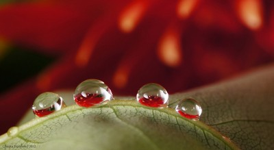 Droplets Family