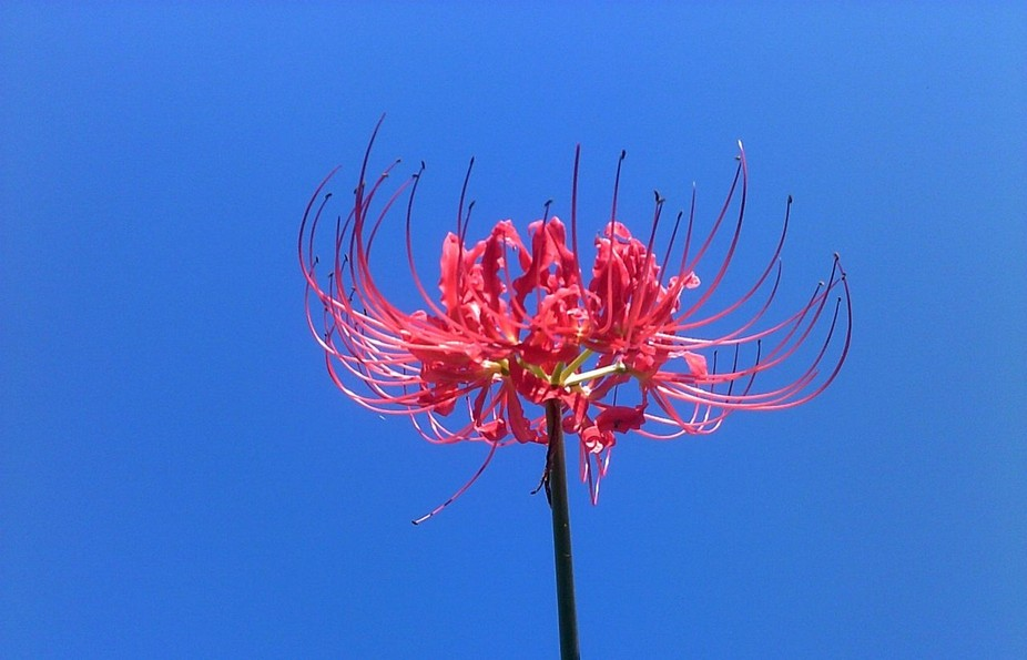 weirdflower4_weirdflower4