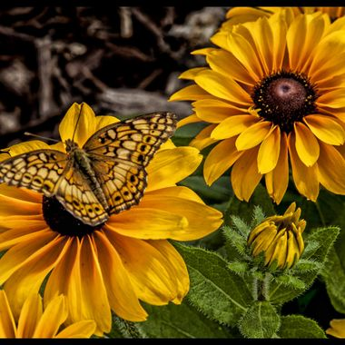 Butterflies and blooms in yellow