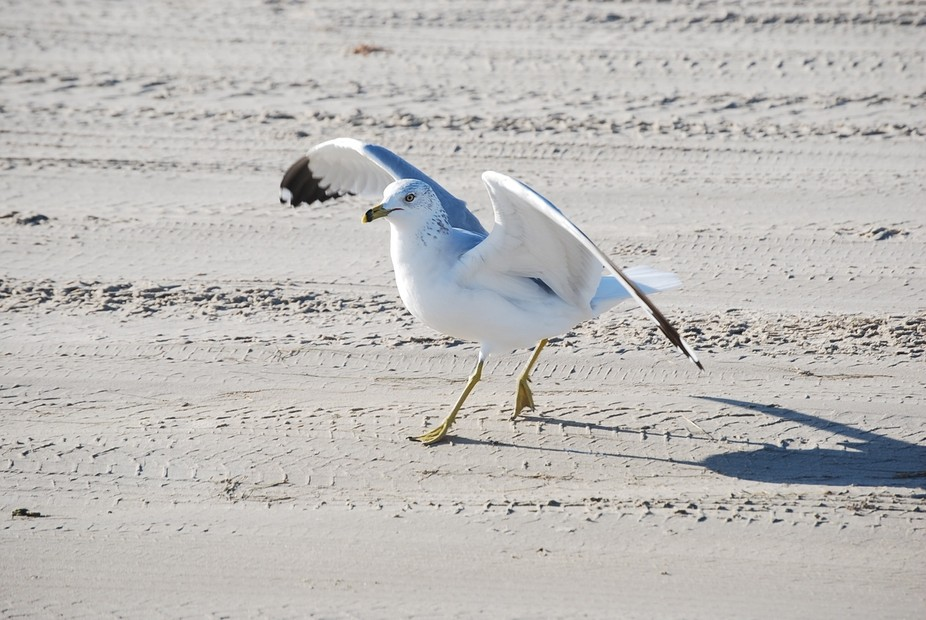Early morning shot of seagull on beach