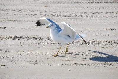 Seagull at preflight