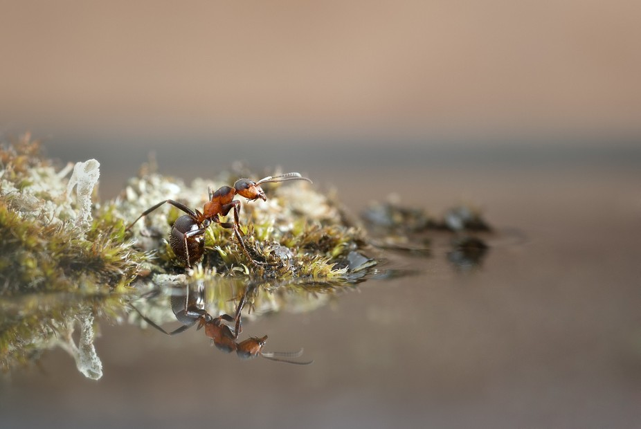 "This picture gave me the name ""Reflective"" when the ant is reflected in the water and t..."