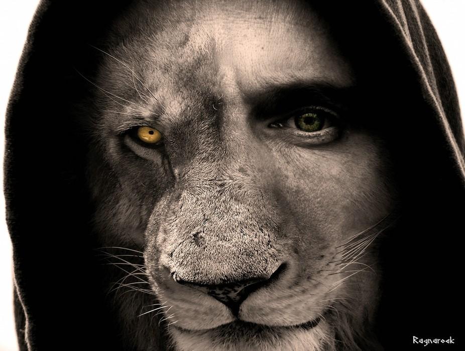 comp_LionMan