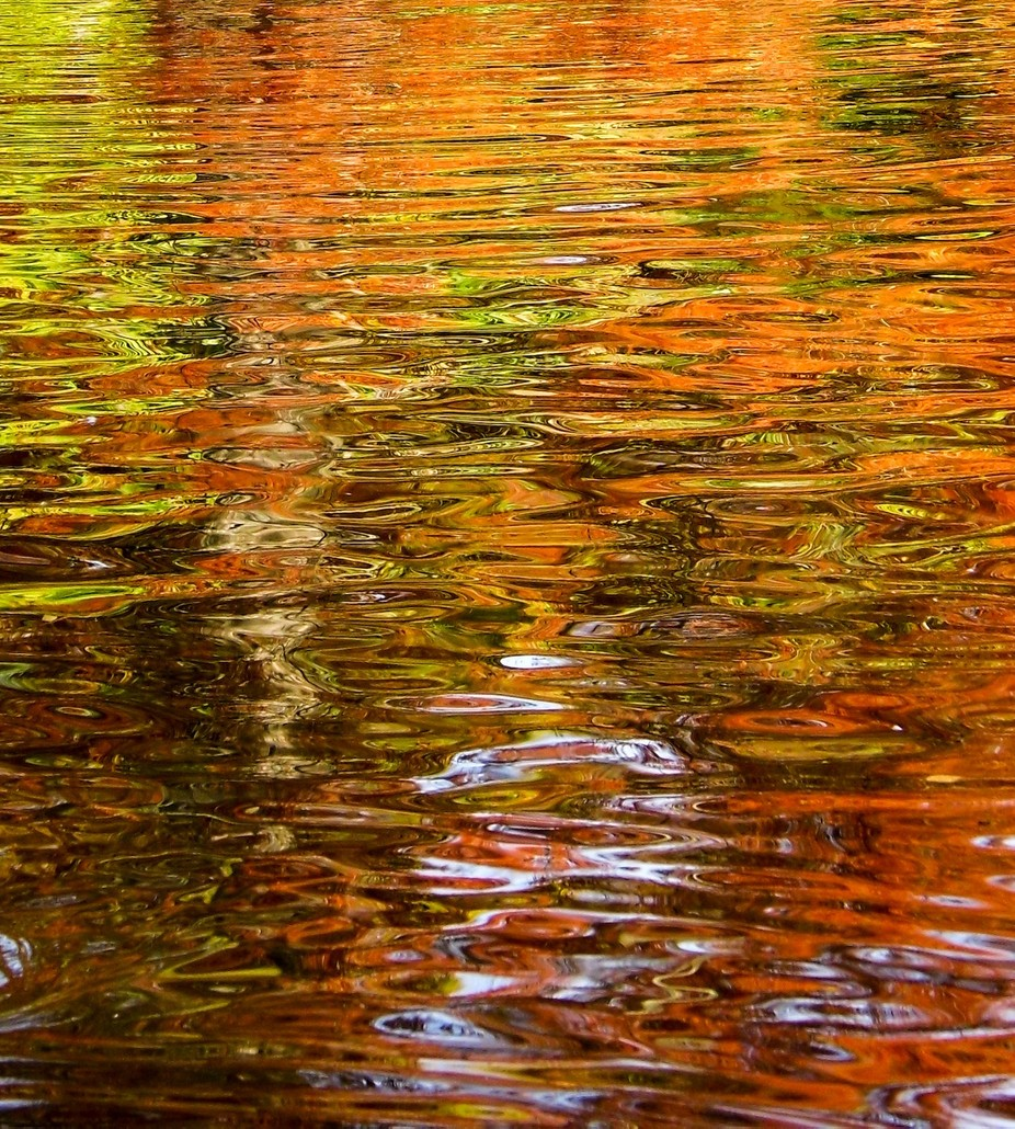 Reflections of swamp cypress in the pool at the CHCH Botanic gardens, NZ