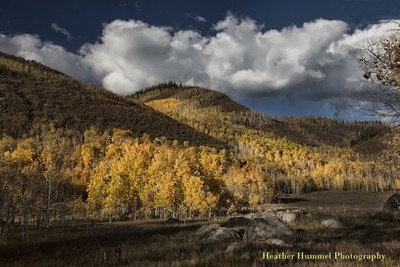 Foliage Hunters Creek