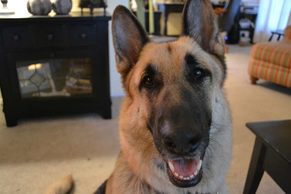 My smiley dog, Gus.