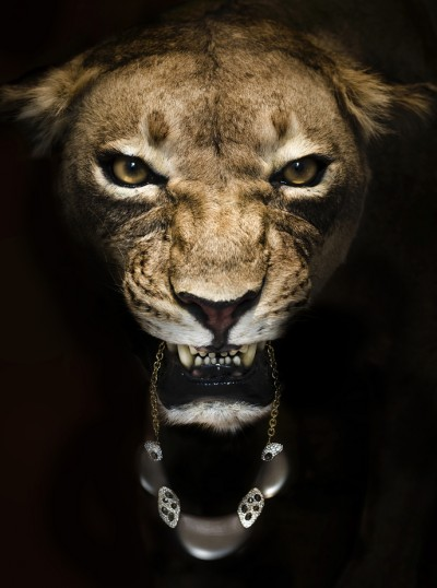 Lion eats jewels