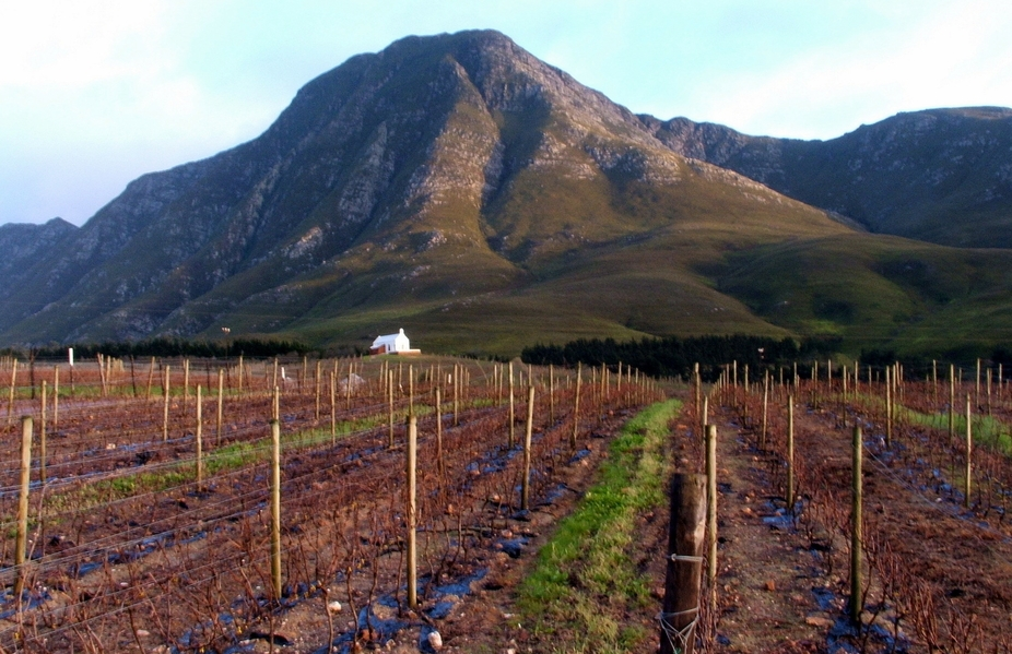 Babylons Tower in the Overberg accros the vineyards of Babylon Farm in the Heaven and Earth Valle...