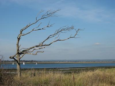 windswept shore