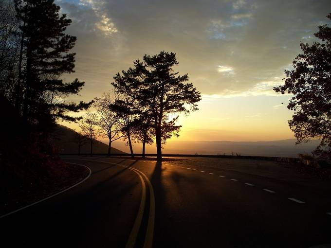 Journey On by sarahthomas - Silhouettes Of Trees Photo Contest